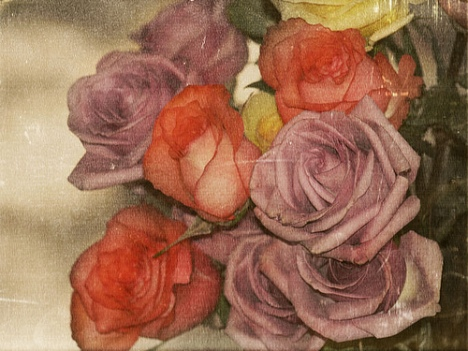 chrysti-hydeck-weathered-roses
